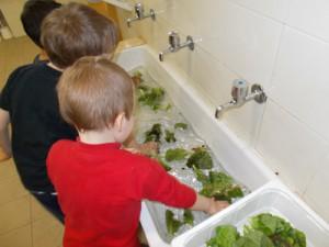 laviamo l'insalata modif